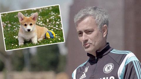 Mourinho từng đi tù vì... chó cưng