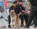 """Chó nghiệp vụ - nỗi ám ảnh của """"hooligan"""" Việt tại V-League"""